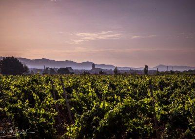 utiel entre viñedos